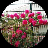 circle-flower-power
